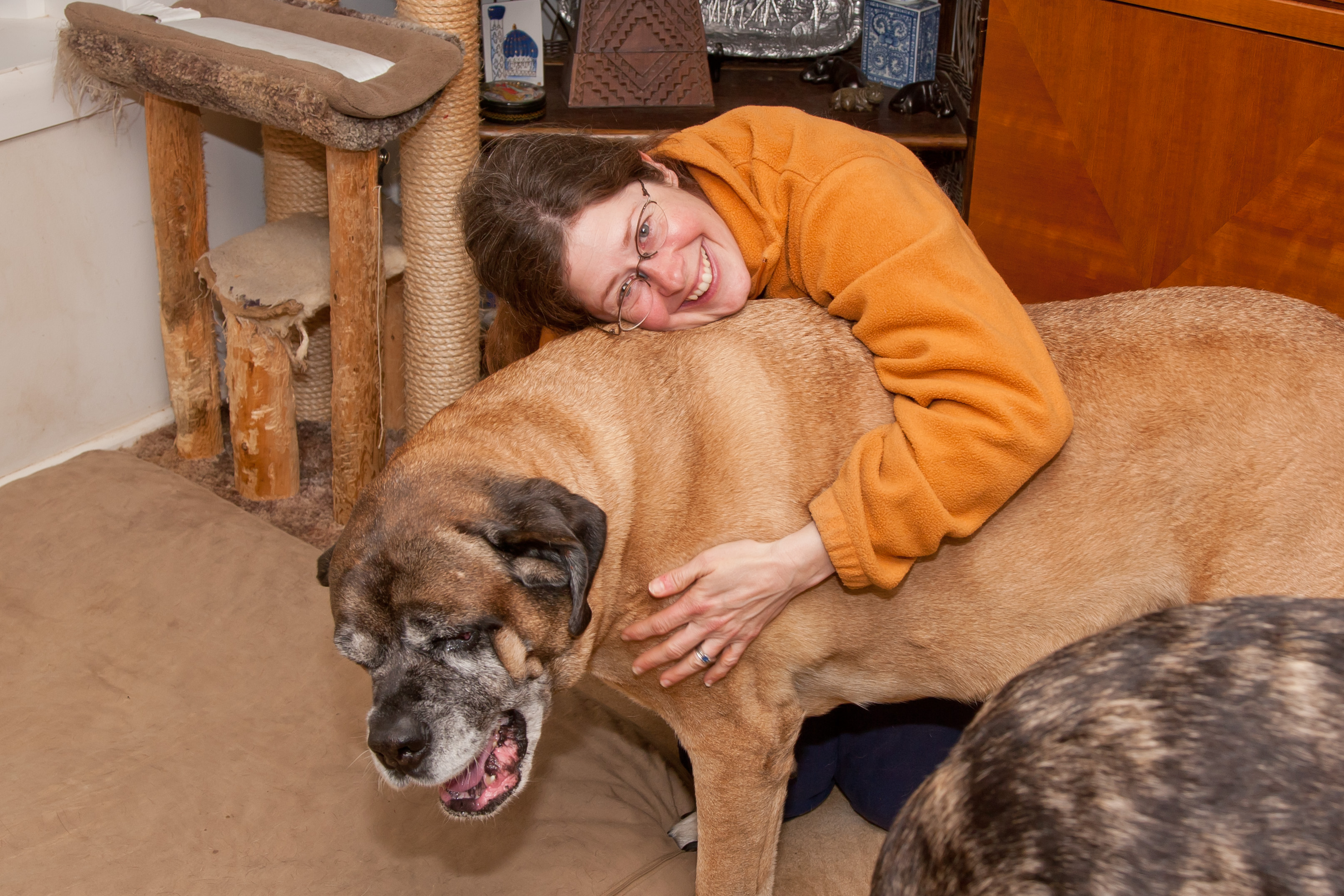 Beth and Cici the English Mastiff